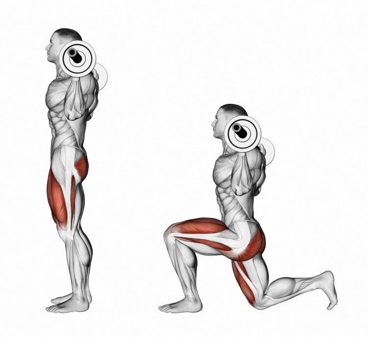 Lunges with a barbell on your shoulders. Exercising for bodybuilding. Target muscles are marked in red. Initial and final steps. 3D illustration